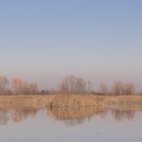 Zona paludosa - Elisabetta Bignami - Bentivoglio (BO)