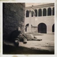 Cats al chiostro - Immacastello - Bologna (BO)
