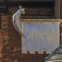 Il Pappagallo - Maurizio rosaspina - Bologna (BO)
