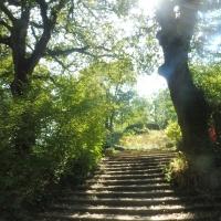 Parco delle Acque Minerali - scalinata - Maurolattuga - Imola (BO)