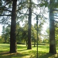 Parco delle Acque Minerali - alberi - Maurolattuga - Imola (BO)