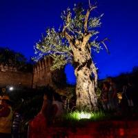 Castrocaro Terme-Festa in Rocca-Festa in Rocca-6777 - Flash2803 - Castrocaro Terme e Terra del Sole (FC)