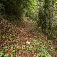 Parco della Rimembranza camminamenti 2 - Boschetti marco 65 - Cesena (FC)