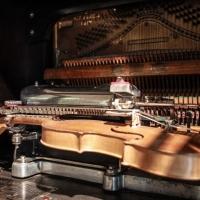 Organetto che suona il violino - Boschettim65 - Cesena (FC)