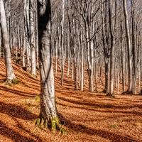 Sentieri di foglie tra le foreste casentinesi - Francesco-1978 - Premilcuore (FC)
