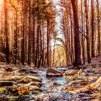 Sentieri tra le foreste casentinesi - Francesco-1978 - Premilcuore (FC)