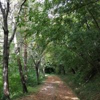 Il sentiero 02 - Marco Musmeci - Sarsina (FC)
