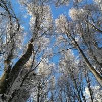 Neve in cielo - Crazyfrog58 - Santa Sofia (FC)