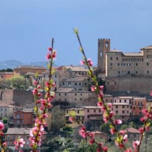 Castello Malatestiano di Longiano - Castello con pesco foto di: |Emiliano Ceredi| - Archivio Fondazione
