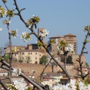 Castello Malatestiano di Longiano - Castello con ciliegio foto di: |Emiliano Ceredi| - Archivio Fondazione