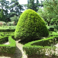 Museo Archeologico Nazionale, particolare del giardino interno all'italiana - Sofiadiviola - Ferrara (FE)