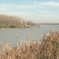 Stellata, paesaggio fluviale - Samaritani - Bondeno (FE)