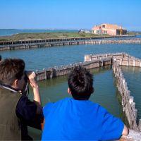 lavoriero con turisti - Samaritani - Comacchio (FE)