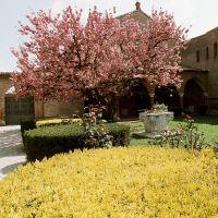 Convento di Sant'Antonio in Polesine con ciliegio fiorito - Baraldi - Ferrara (FE)