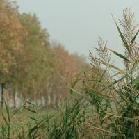 canale di irrigazione - Samaritani - Fiscaglia (FE)