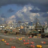 il porto - rebeschini - Goro (FE)