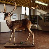 Museo del Parco del Delta. Cervo - Samaritani - Mesola (FE)