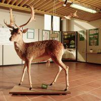 Museo del parco del Delta - Samaritani - Mesola (FE)