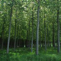 Bosco dell'Azienda agricola Le Pradine - Meneghetti - Mirabello (FE)