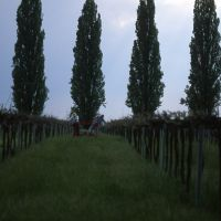 Azienda agricola Le Pradine - Meneghetti - Mirabello (FE)