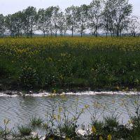 Campo fiorito - Meneghetti - Poggio Renatico (FE)