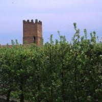 Torre dell'Uccellino vista in lontananza - Meneghetti - Poggio Renatico (FE)