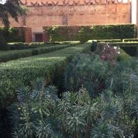 Colore del giardino - Alison Mary Lazzari - Ferrara (FE)