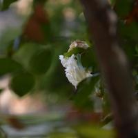 Particolare rosa fuori stagione - Laura Dolcetti - Ferrara (FE)