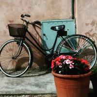 Bici e fiori - Alessandro1965B - Voghiera (FE)