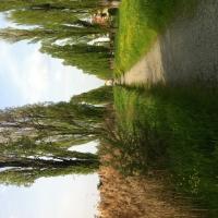 Filare di pioppi cipressini Image 1 - Francasassi - Sassuolo (MO)