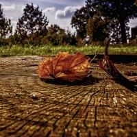Scorcio d'autunno - Giovanna molinari - Nonantola (MO)