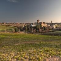 Fra le vigne di Levizzano Rangone - Quart1984 - Castelvetro di Modena (MO)