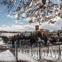L'inverno fra i filari al Castello di Levizzano - Luca Nacchio - Castelvetro di Modena (MO)