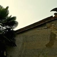 Particolare stemma del casato - Caba2011 - Gropparello (PC)
