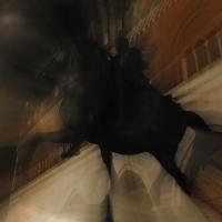 Cavallo di notte, mosso - Ele.vt - Piacenza (PC)