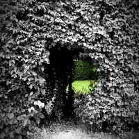 Il giardino segreto - Rocco93555 - Parma (PR)