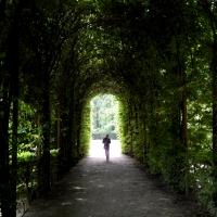 Viale nei giardini della Reggia di Colorno 02 - Roberta Renucci - Colorno (PR)
