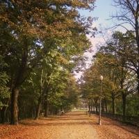 Viale Alto Cittadella - Alessandra Pradelli - Parma (PR)