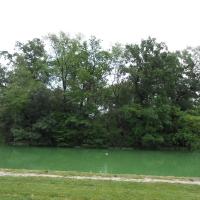 Parco Ducale a Parma (laghetto) - Cristina Guaetta - Parma (PR)