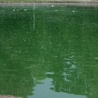 Parco Ducale a Parma (specchio d'acqua) - Cristina Guaetta - Parma (PR)