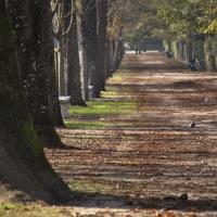 La natura ducale - CosCremona - Parma (PR)