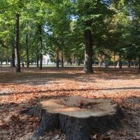 Alberi del Parco Ducale - Simo129 - Parma (PR)