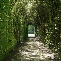 Viale alberato del parco della reggia di Colorno - DurMat - Colorno (PR)