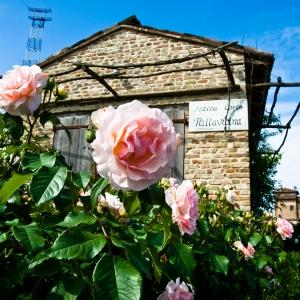 Antica Corte Pallavicina - Le rose dell'Antica Corte Pallavicina foto di: Alessandro Gandolfi - Antica Corte Pallavicina