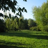 Parco del Loto, alberi - Sofiadiviola - Lugo (RA)