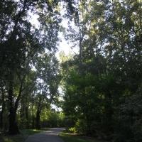 Parco del Loto, percorsi - Sofiadiviola - Lugo (RA)