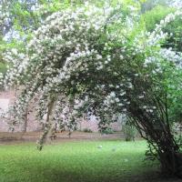SantApollinareNuovo NLM (1) - NikyLovesMonuments - Ravenna (RA)