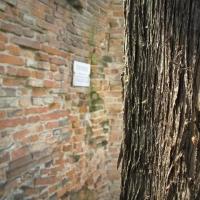 Tra alberi e storia - Terribletrudie - Castel Bolognese (RA)