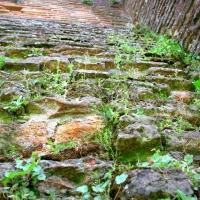Incursioni di verde - Terribletrudie - Castel Bolognese (RA)