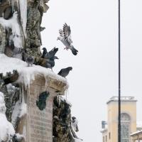 Fontana Monumentale Faenza-3 - Lorenzo Gaudenzi - Faenza (RA)